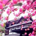 งานร้านคาราโอเกะญี่ปุ่นงานอิสระไม่จำกัดเวลา ศรีราชา สีลม ธนิยะ กทม