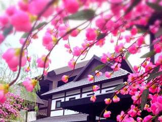 งานร้านคาราโอเกะญี่ปุ่นพาลูกค้าเที่ยว รายได้ดี ติปเยอะ ไกด์พาเที่ยว