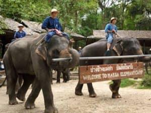 ช้างไทยฉลาดน่ารักมากๆ